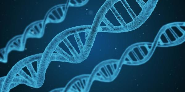 MSc Human Molecular Genetics