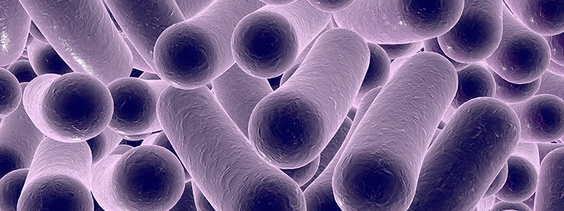 MRes Biomedical Research (Microbiome in Health and Disease)